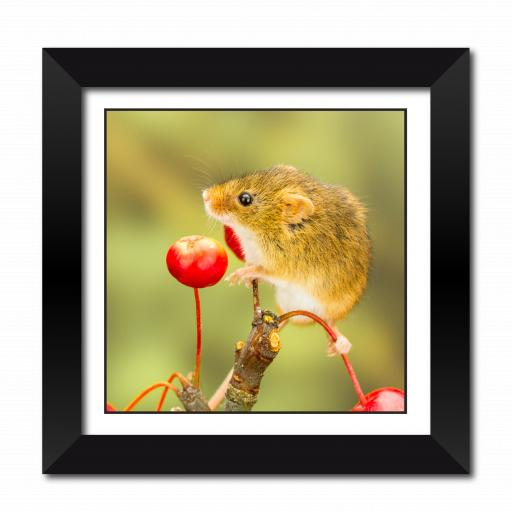 Mouse among the berries Framed Print