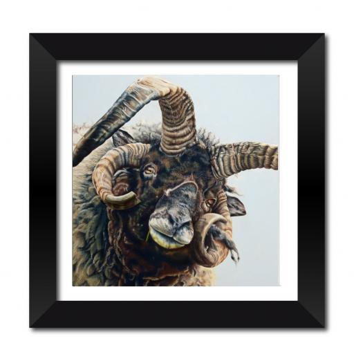 """Jacob The Sheep 18 x 18"""" Framed Print"""