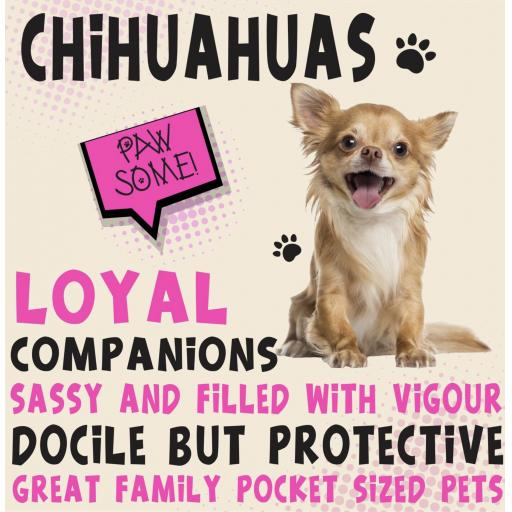 Chihuahuas Metal Wall Sign