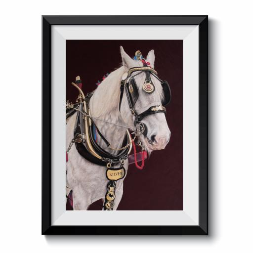 Silver Shire Horse A3 Print Framed Print