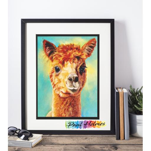 A3 Framed of Sox The Alpaca