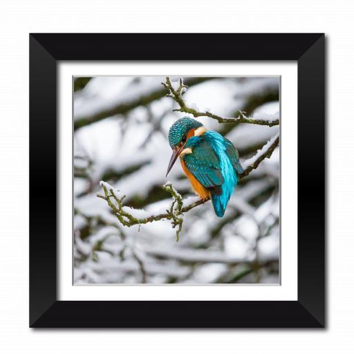 Winter Kingfisher Framed Print