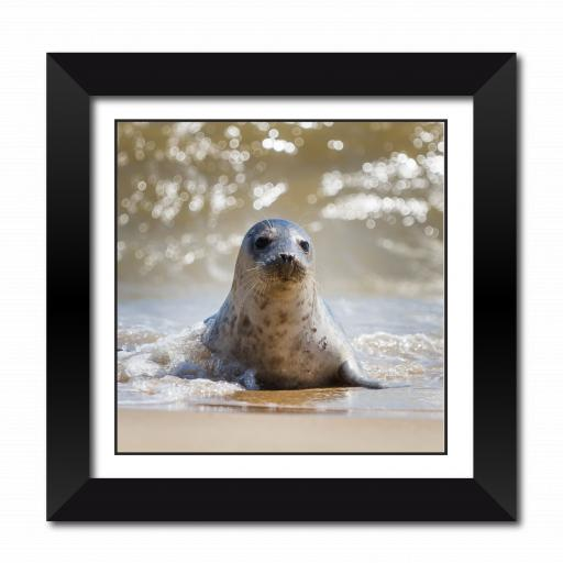 Sandy The Sealion Framed Print