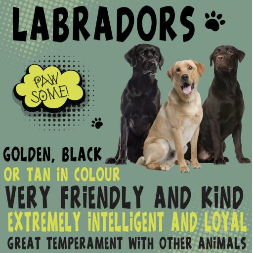 Labrador Metal Wall Sign