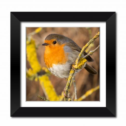 Christmas Robin Framed Print