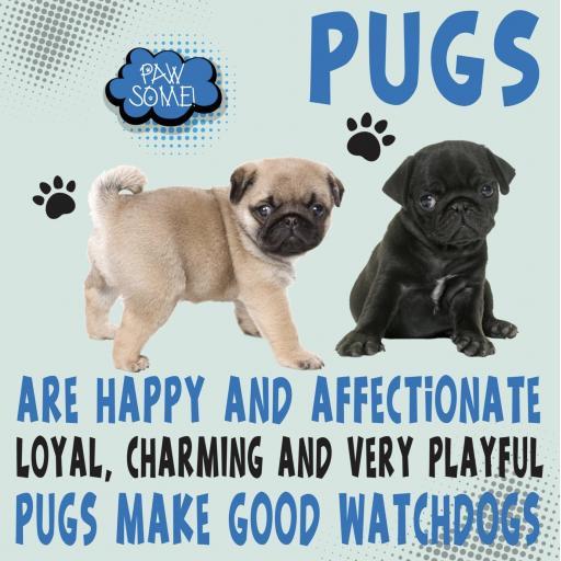 Pugs Metal Wall Sign