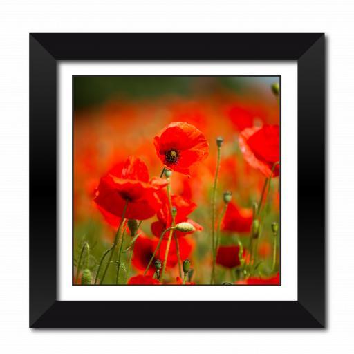 Remembrance Poppy Framed Print